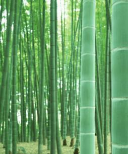 Bamboo And Chinese Bamboo And Chinese Culture